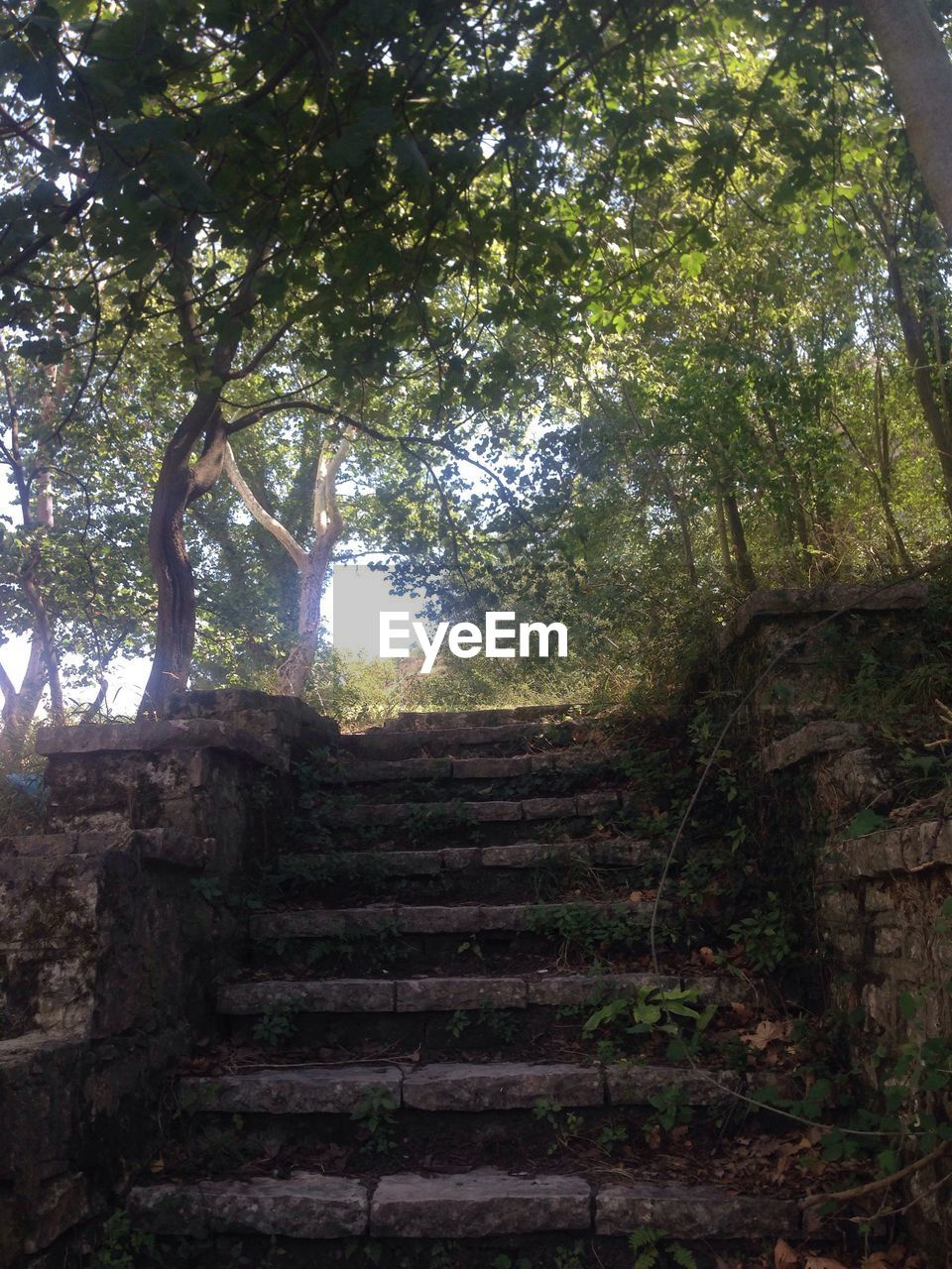 steps, staircase, steps and staircases, tree, stairs, nature, climbing, no people, day