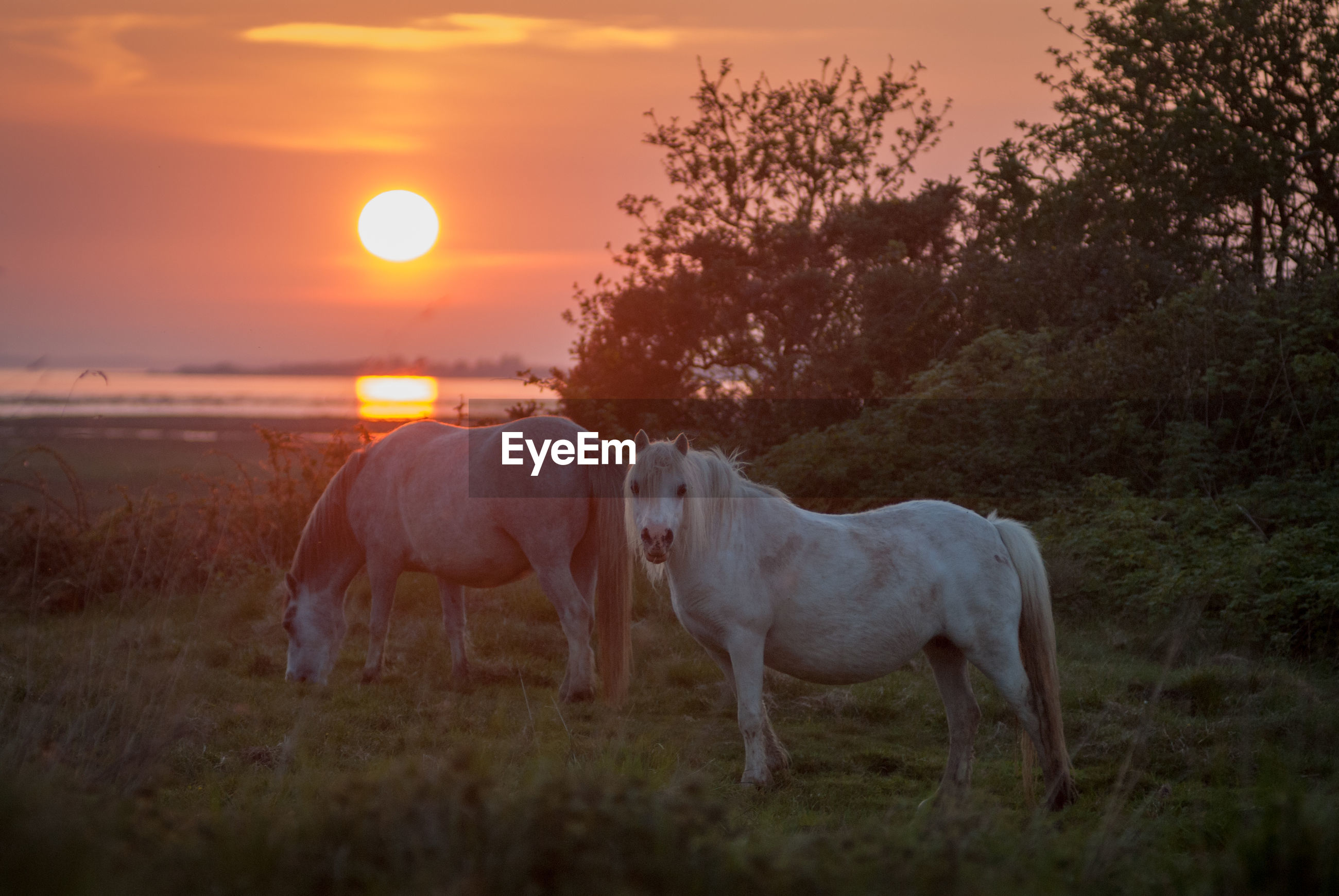 Portrait of horses on land during sunset