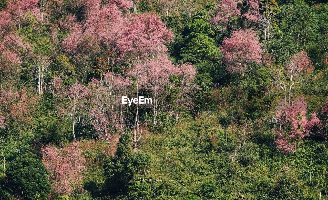 HIGH ANGLE VIEW OF PLANTS IN FOREST