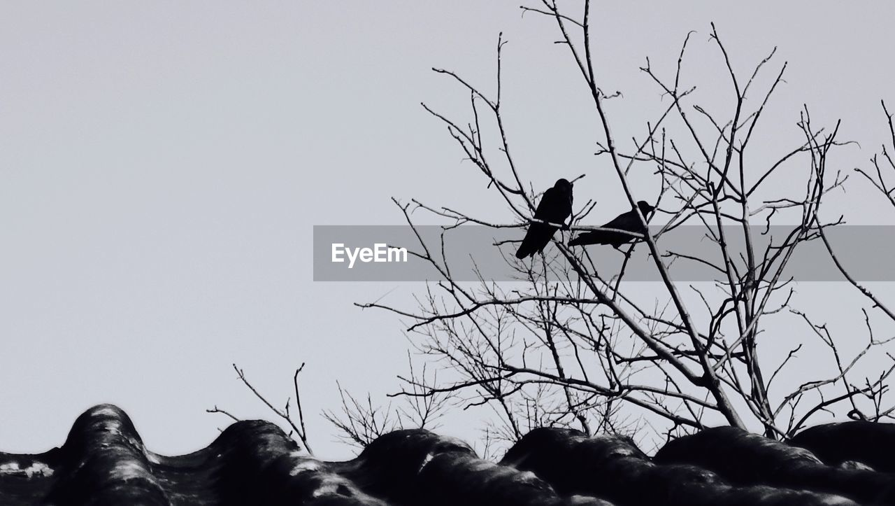 View of birds perching on tree