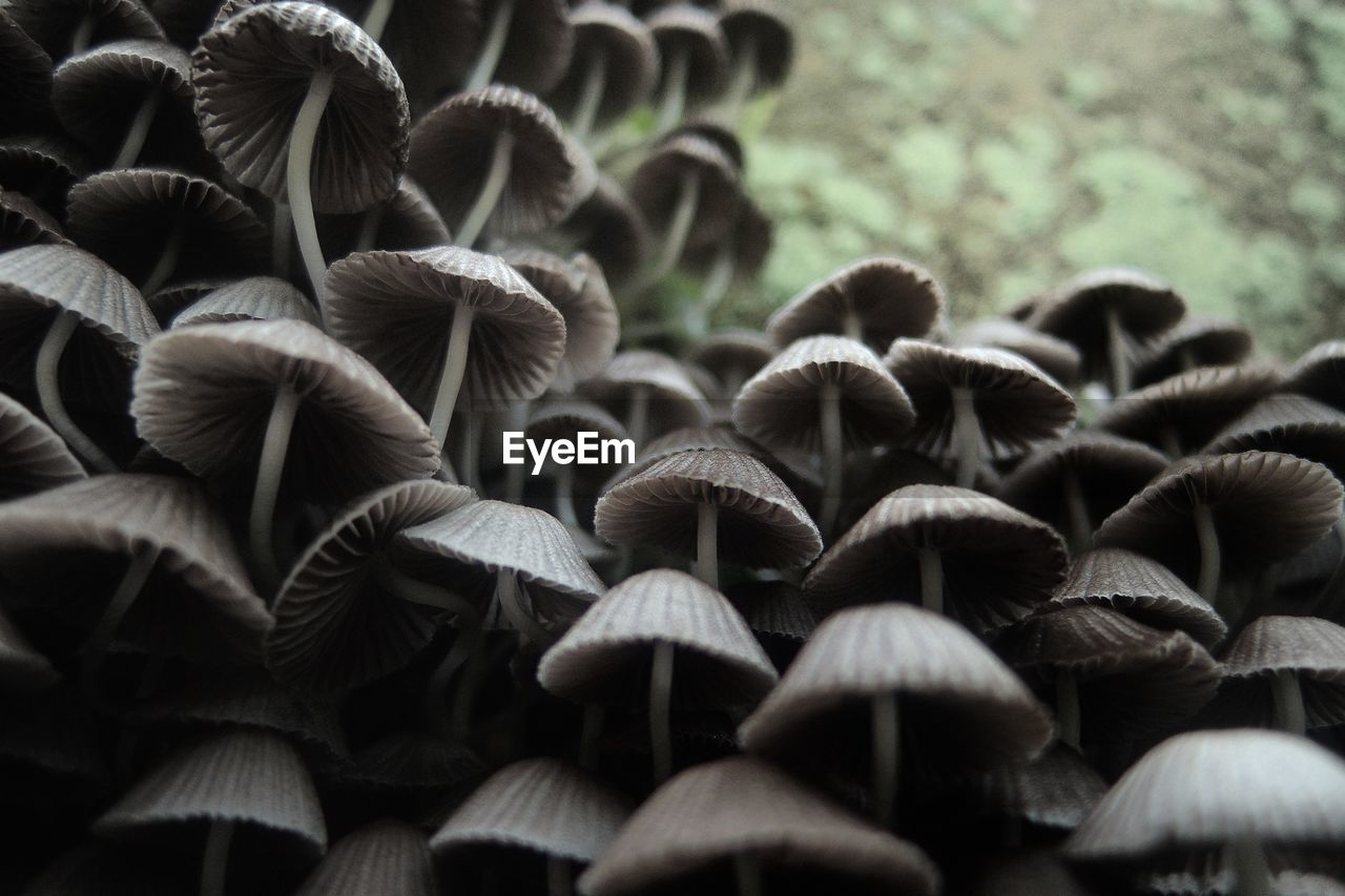 Low Angle View Of Mushrooms Growing On Field