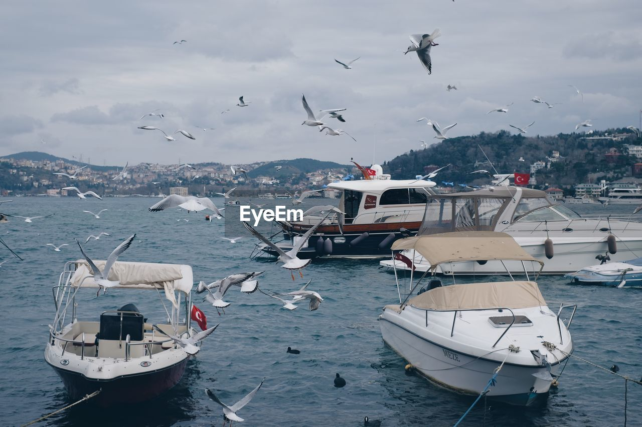 nautical vessel, water, transportation, mode of transportation, flying, bird, animal themes, animal, animals in the wild, animal wildlife, sea, vertebrate, moored, group of animals, large group of animals, sky, nature, day, no people, seagull, outdoors, sailboat, flock of birds, yacht