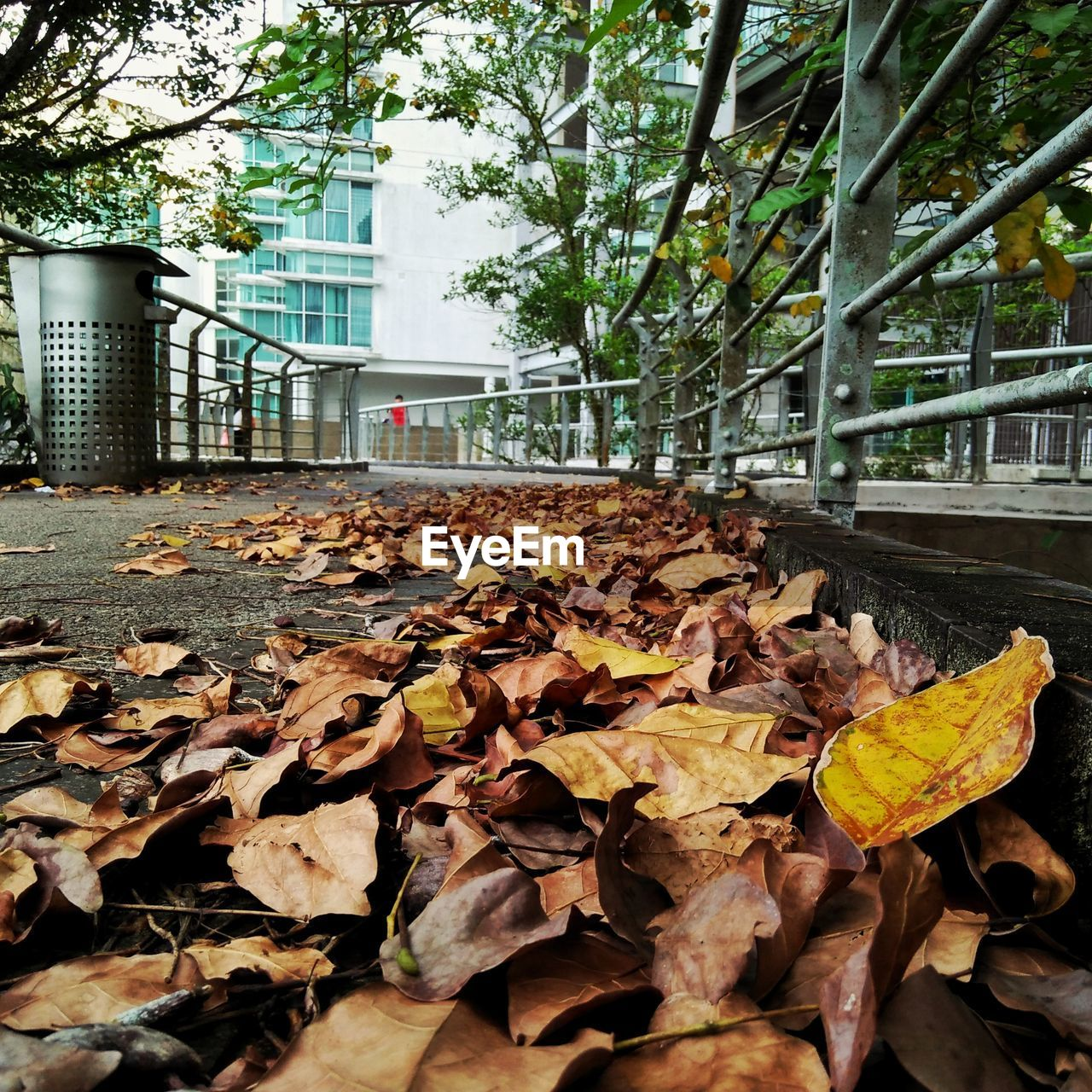 plant part, leaf, change, leaves, autumn, dry, day, nature, no people, tree, plant, falling, land, outdoors, close-up, beauty in nature, architecture, field, built structure, park, natural condition, maple leaf, fall, surface level, autumn collection