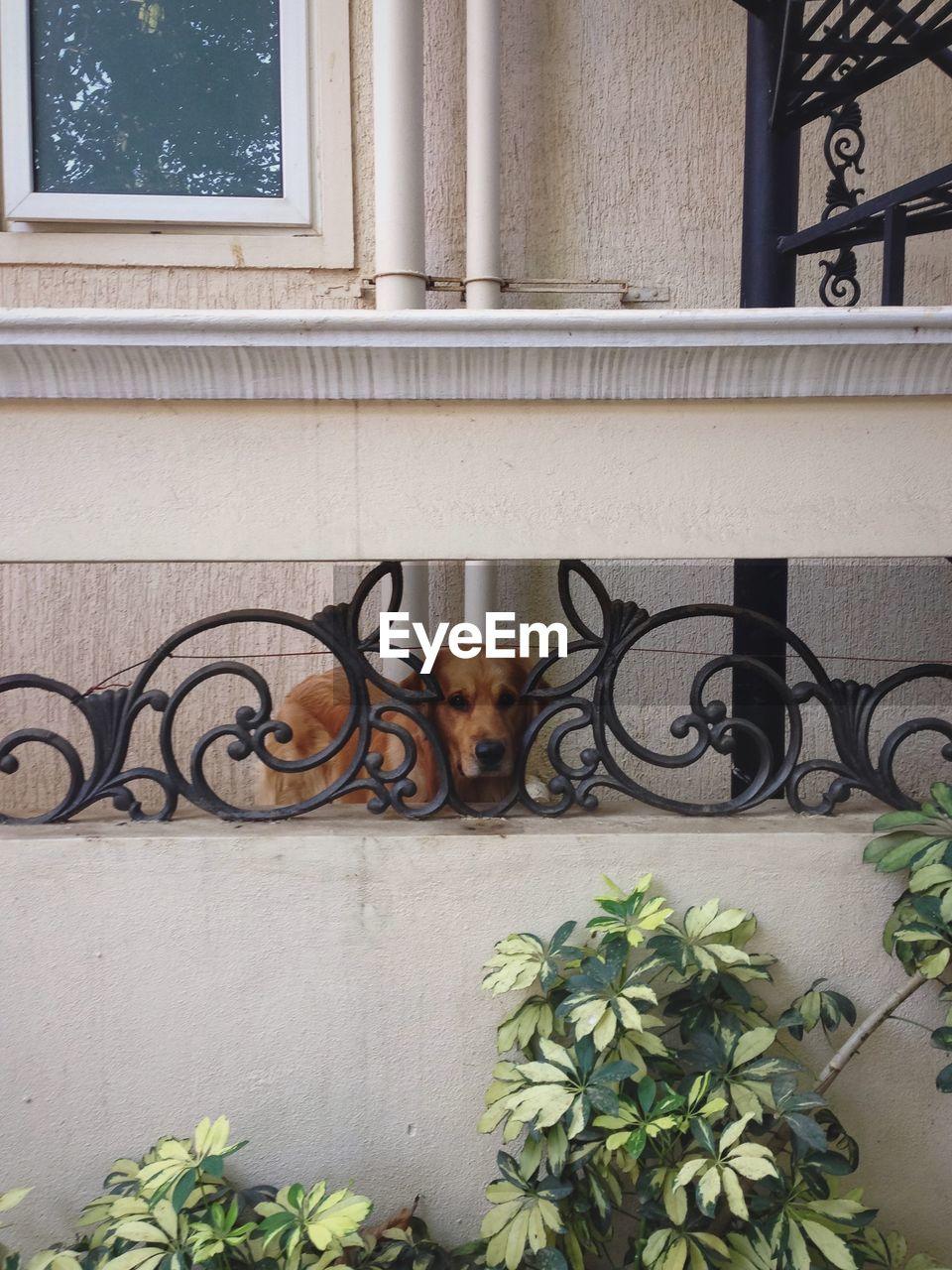 Dog On Balcony Of House