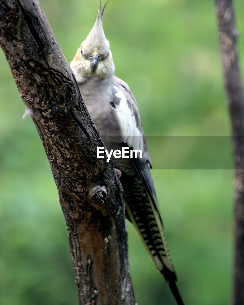 animal themes, animals in the wild, one animal, bird, animal wildlife, focus on foreground, perching, tree, tree trunk, nature, branch, no people, day, outdoors, woodpecker, close-up, beauty in nature