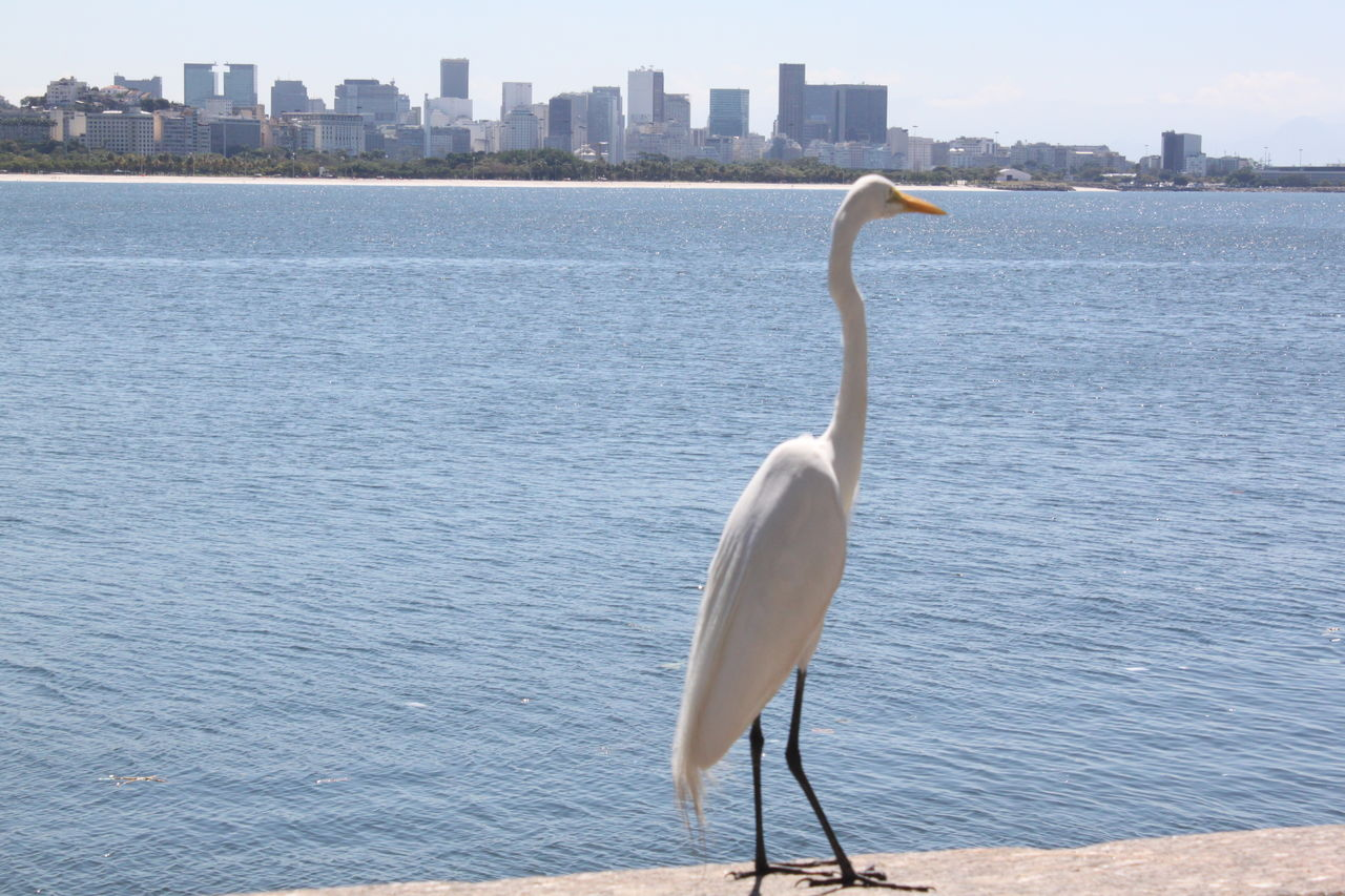 water, animals in the wild, one animal, architecture, animal themes, skyscraper, bird, city, day, building exterior, outdoors, built structure, nature, cityscape, no people, animal wildlife, scenics, sea, sky, crane - bird, urban skyline, beauty in nature