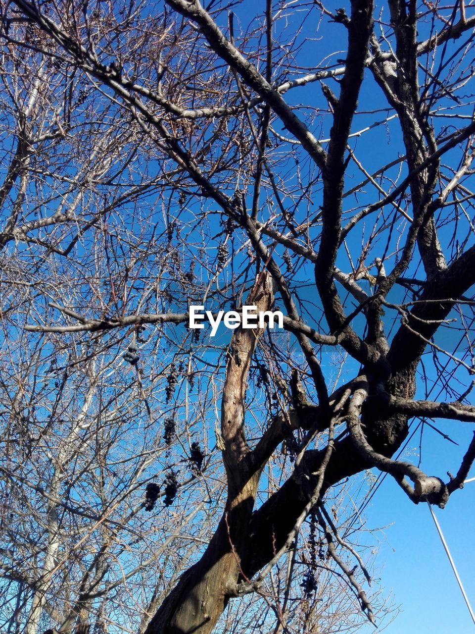 branch, low angle view, tree, bare tree, day, nature, no people, clear sky, outdoors, sky, growth, beauty in nature, blue, dried plant, flower