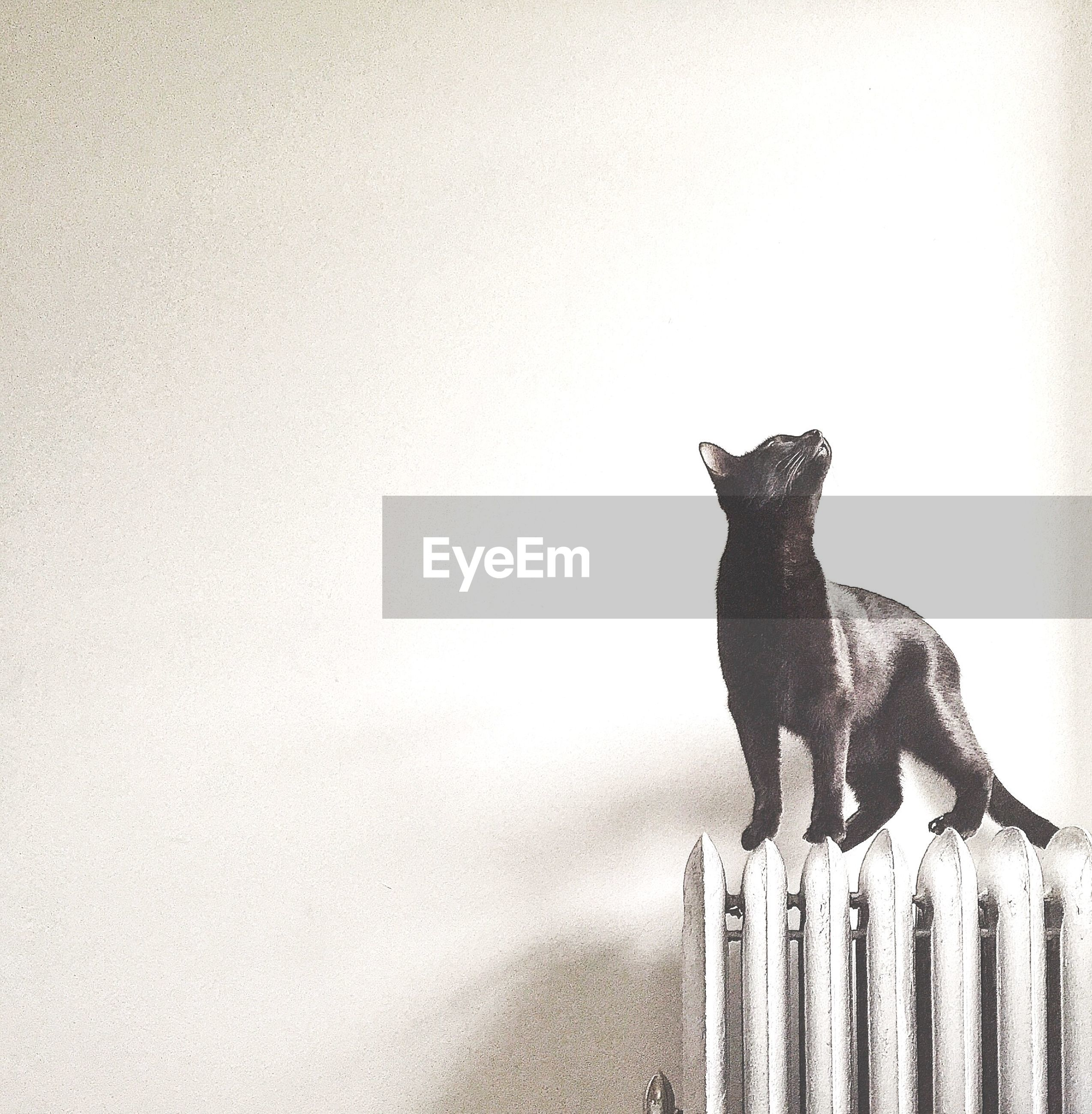 Close-up of cat on heater against wall