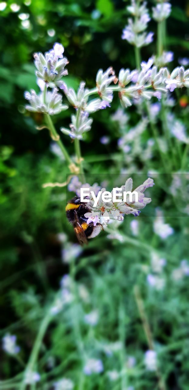 flowering plant, flower, fragility, plant, vulnerability, invertebrate, freshness, beauty in nature, animal themes, animals in the wild, insect, growth, animal wildlife, one animal, animal, flower head, petal, bee, close-up, pollination, no people, purple, outdoors