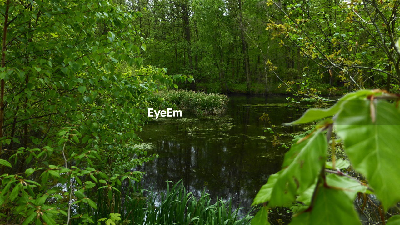 nature, growth, leaf, plant, green, green color, outdoors, forest, tree, lush, no people, water, tranquility, day, beauty in nature, flower