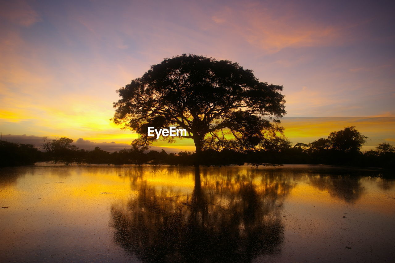 sunset, reflection, tree, beauty in nature, nature, orange color, water, tranquil scene, scenics, sky, silhouette, tranquility, lake, majestic, idyllic, no people, outdoors, cloud - sky