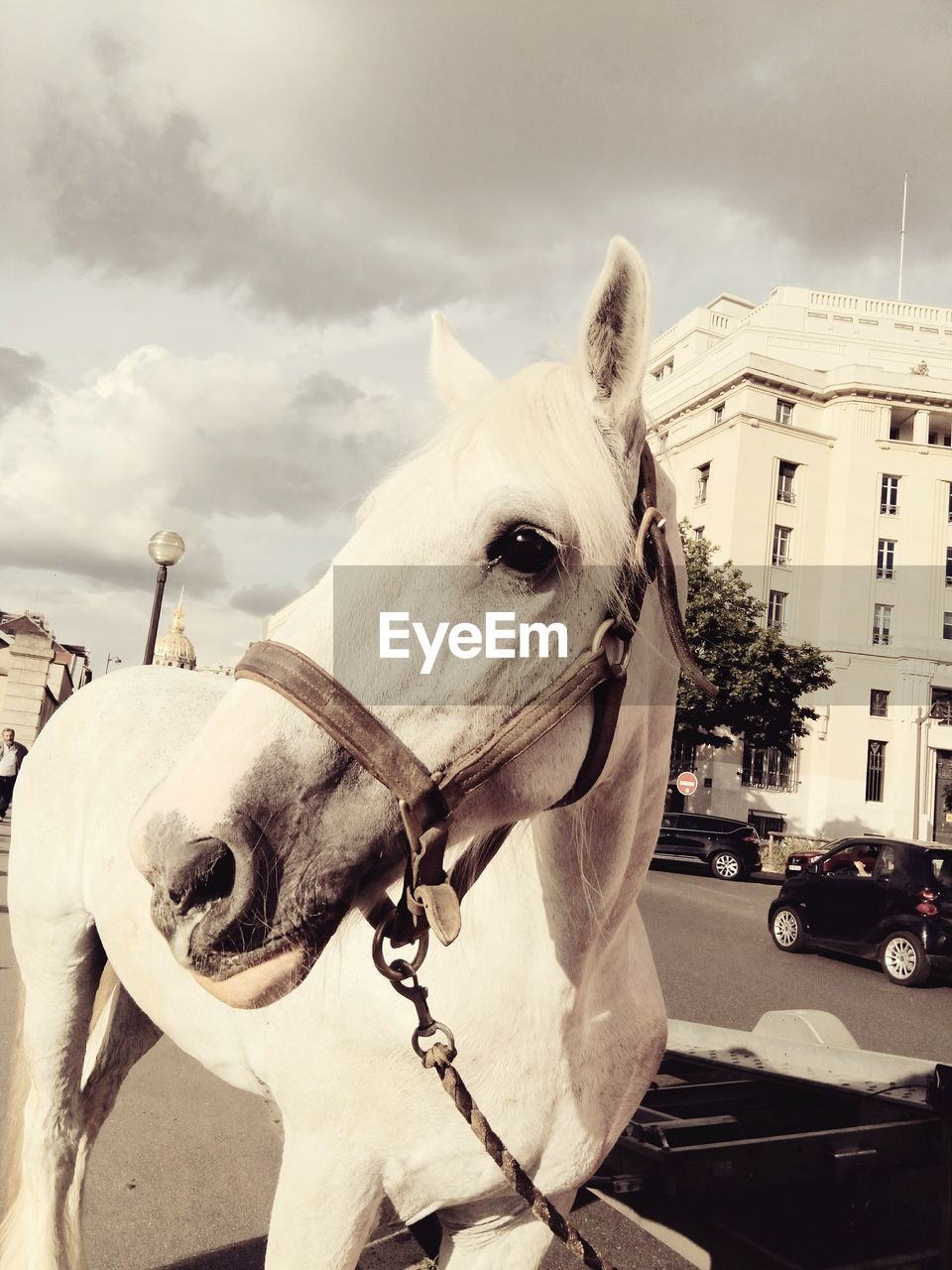 Close-Up Of Horse With Buildings In Background