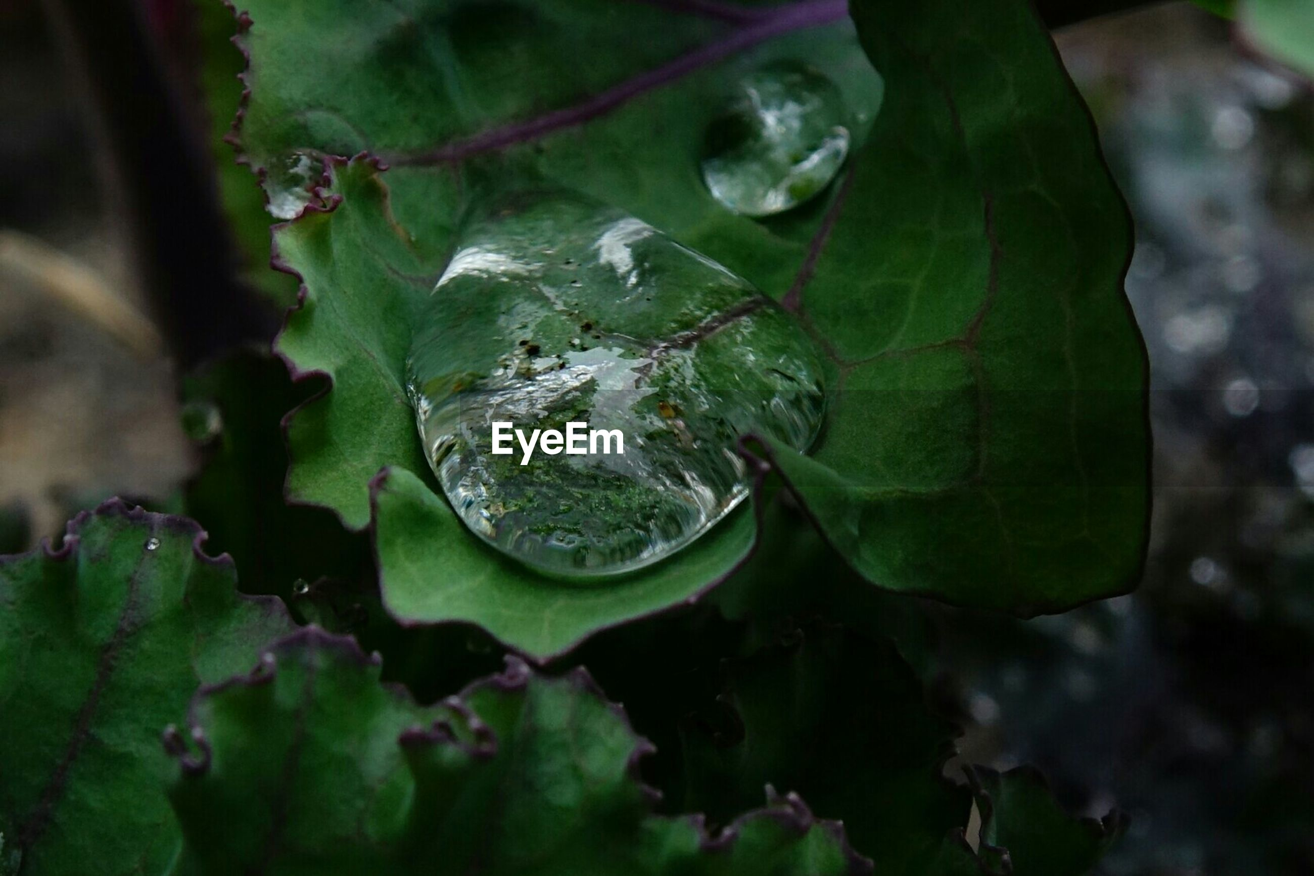 Close-up of water drops on leaf during monsoon