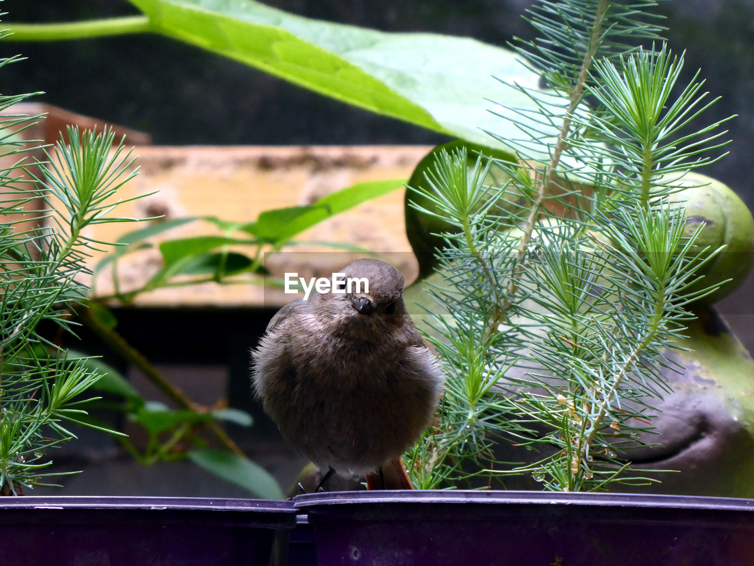 animal themes, animal, one animal, bird, vertebrate, animal wildlife, plant, animals in the wild, leaf, nature, plant part, close-up, day, focus on foreground, no people, green color, growth, perching, outdoors, young bird