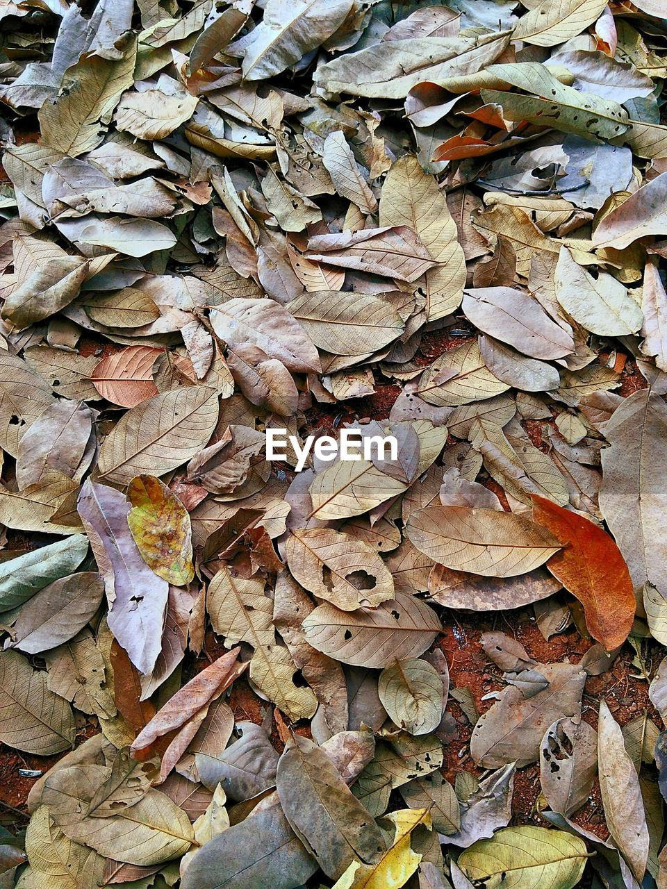 autumn, leaf, change, dry, leaves, abundance, fallen, nature, no people, outdoors, large group of objects, fragility, day, backgrounds, full frame, maple leaf, close-up, maple