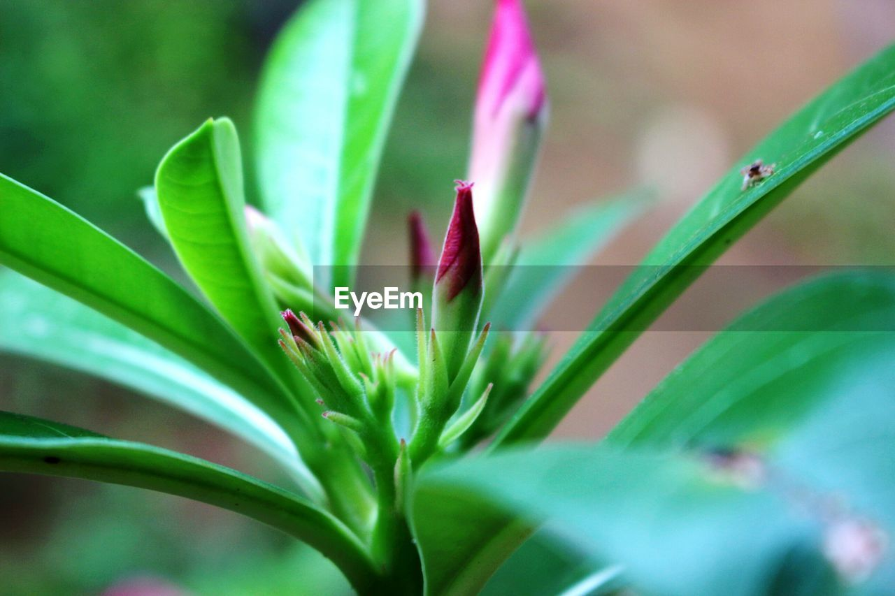 growth, plant, green color, nature, leaf, selective focus, outdoors, flower, day, close-up, no people, beauty in nature, fragility, freshness