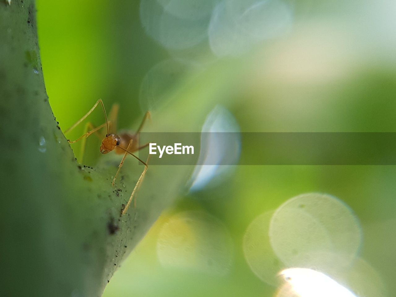 insect, animals in the wild, one animal, animal themes, nature, close-up, green color, spider, selective focus, leaf, animal wildlife, no people, day, plant, outdoors, focus on foreground, growth, beauty in nature