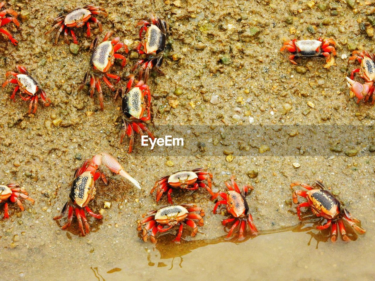 animal, animal themes, animal wildlife, crab, group of animals, animals in the wild, high angle view, crustacean, sea, land, large group of animals, nature, day, marine, claw, sea life, no people, insect, water, beach, outdoors