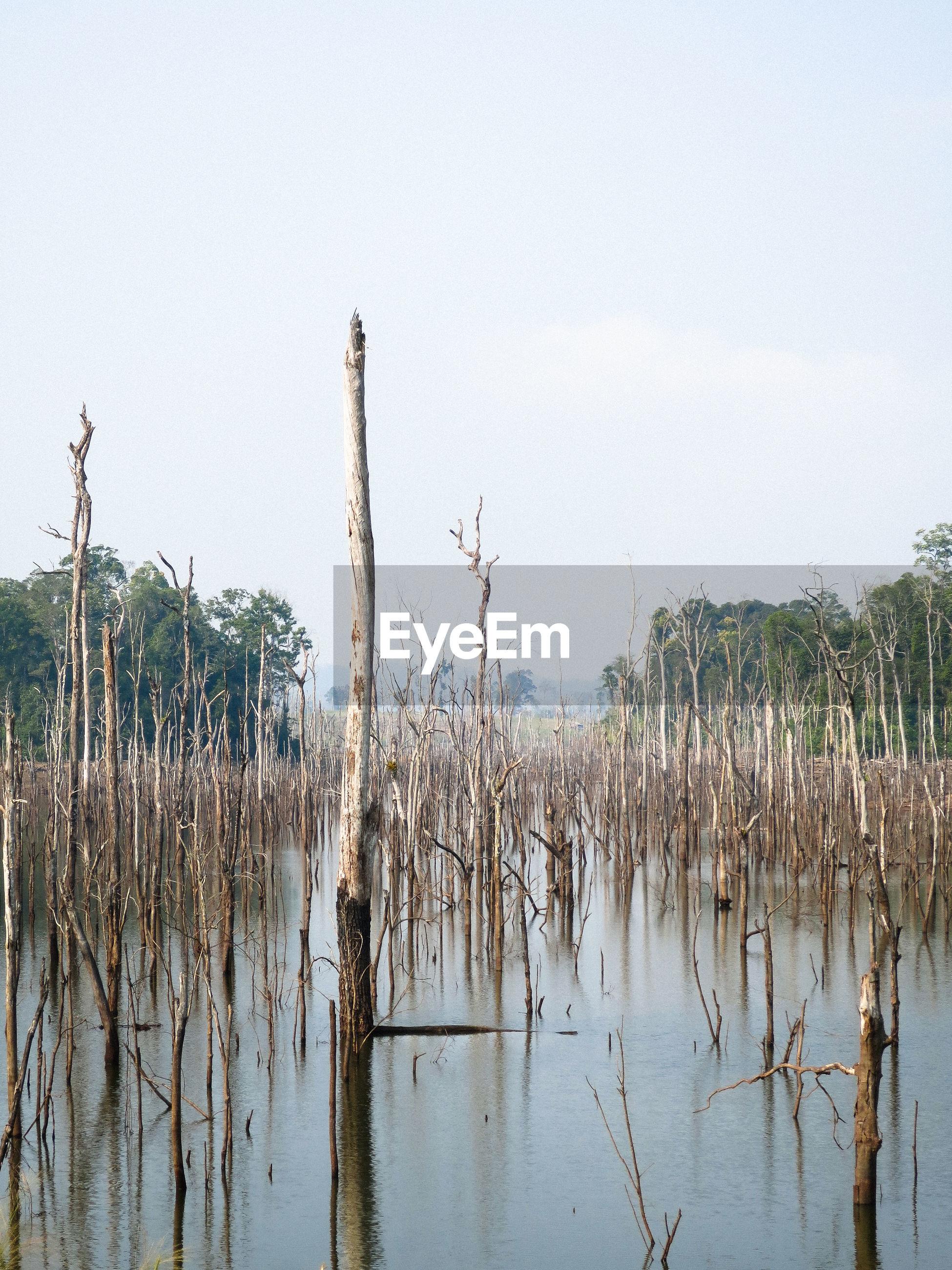 PANORAMIC VIEW OF REEDS AGAINST LAKE