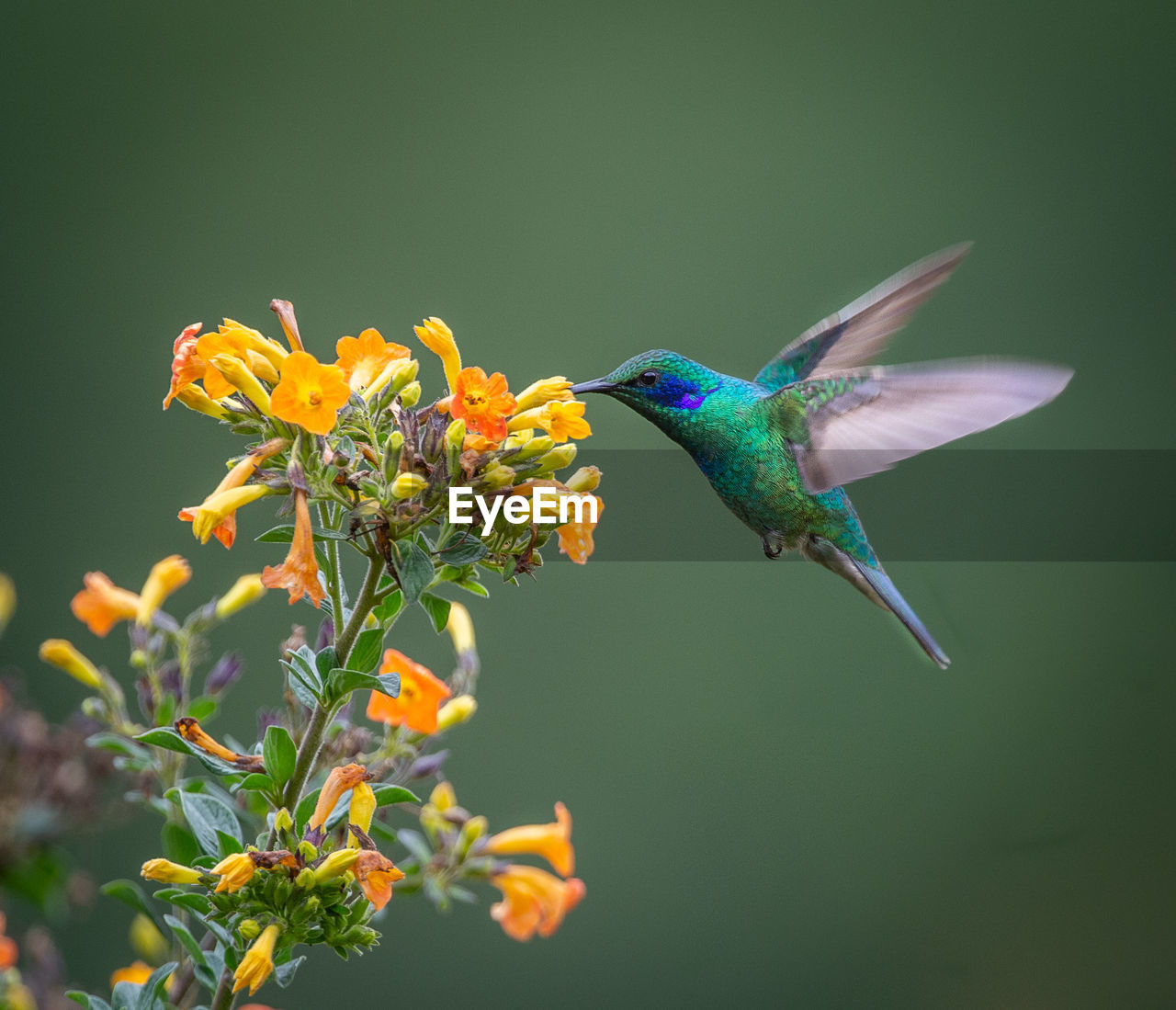HIGH ANGLE VIEW OF BIRD FLYING IN A FLOWER