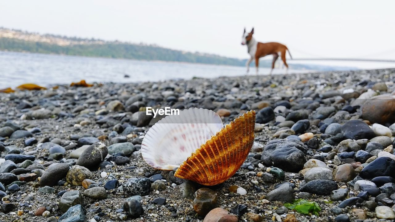 land, beach, nature, animal wildlife, animal, solid, water, beauty in nature, rock, no people, sea, day, stone - object, animal themes, shell, focus on foreground, stone, close-up, animal shell, pebble, outdoors, surface level