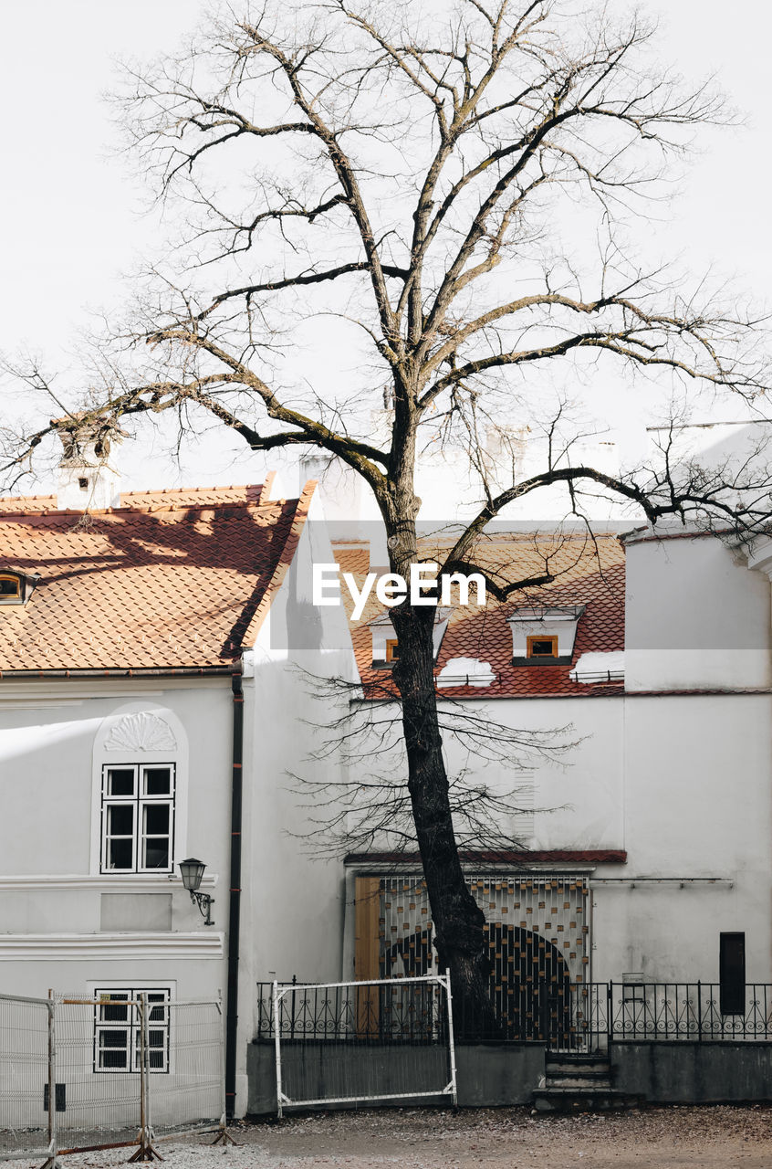 Bare Tree And Buildings Against Sky During Winter