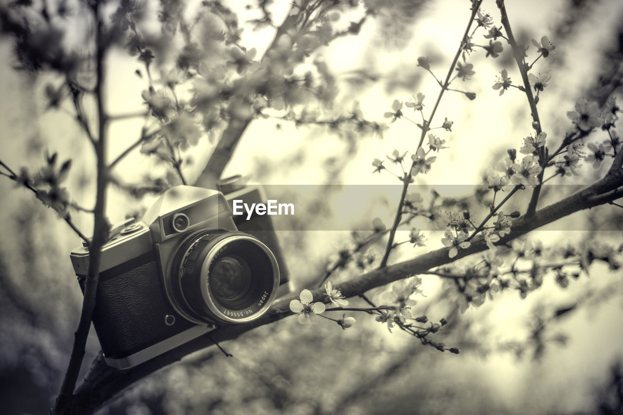 LOW ANGLE VIEW OF CAMERA AGAINST TREE