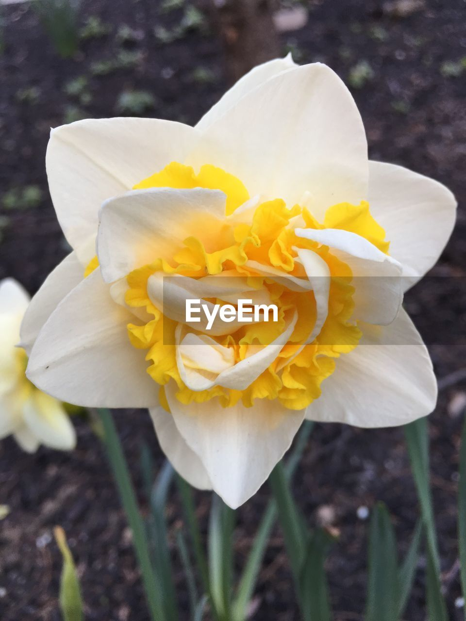 flower, petal, flower head, nature, fragility, beauty in nature, yellow, freshness, growth, outdoors, plant, no people, blooming, close-up, day