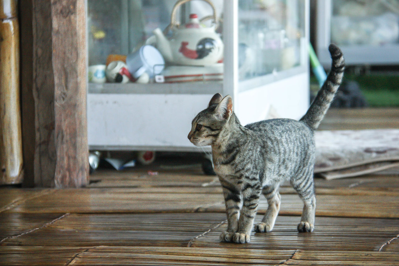 mammal, animal themes, animal, domestic animals, domestic, one animal, pets, vertebrate, feline, cat, domestic cat, no people, focus on foreground, indoors, flooring, day, table, wood - material, glass - material, window, whisker