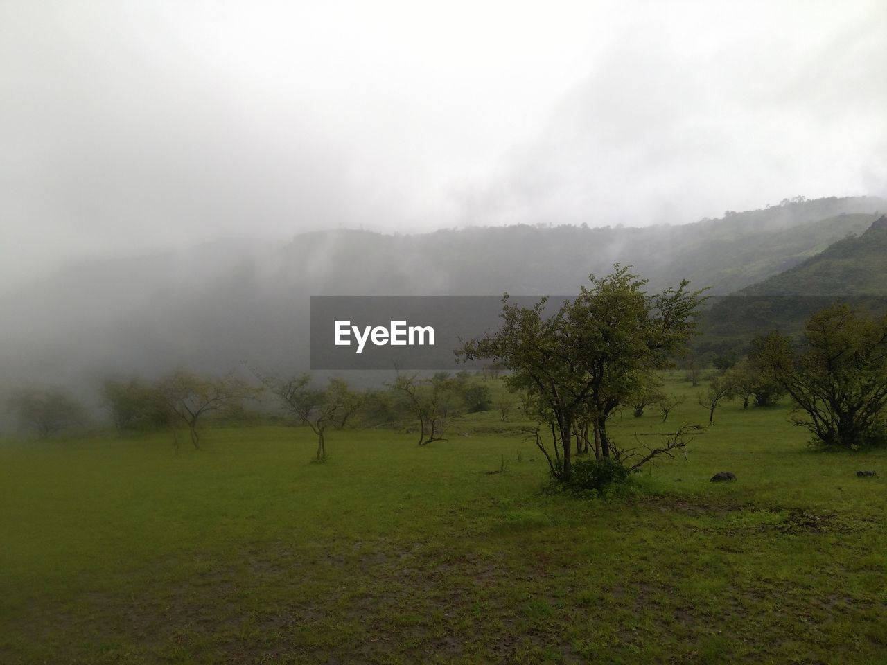 fog, landscape, nature, beauty in nature, tranquility, mountain, mist, tranquil scene, tree, grass, scenics, no people, field, day, outdoors, hazy, green color, growth, sky