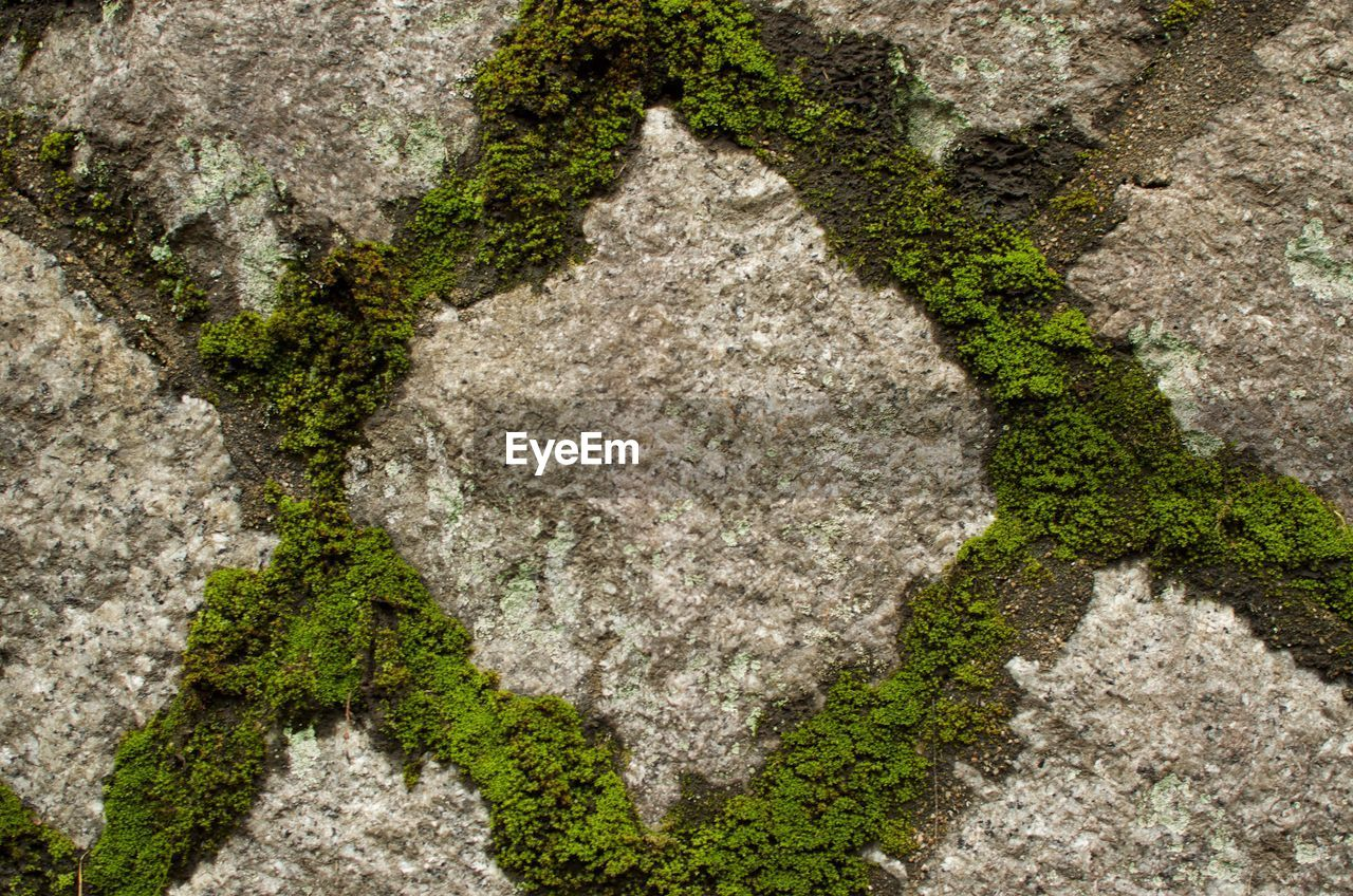 solid, no people, textured, rock, nature, rock - object, architecture, close-up, backgrounds, day, plant, full frame, granite, creativity, outdoors, marble, moss, built structure, pattern, directly above