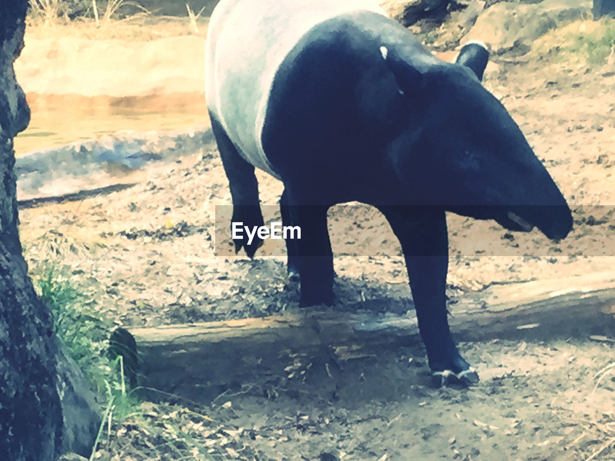 animal themes, one animal, standing, full length, mammal, domestic animals, sunlight, rear view, black color, walking, field, sand, day, two animals, nature, water, outdoors, side view, shadow, animals in the wild
