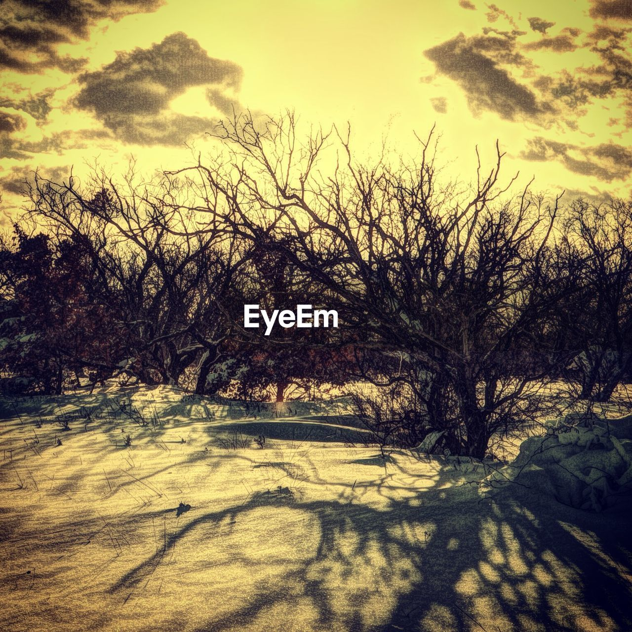 Bare Trees On Snow Covered Field Against Dusk