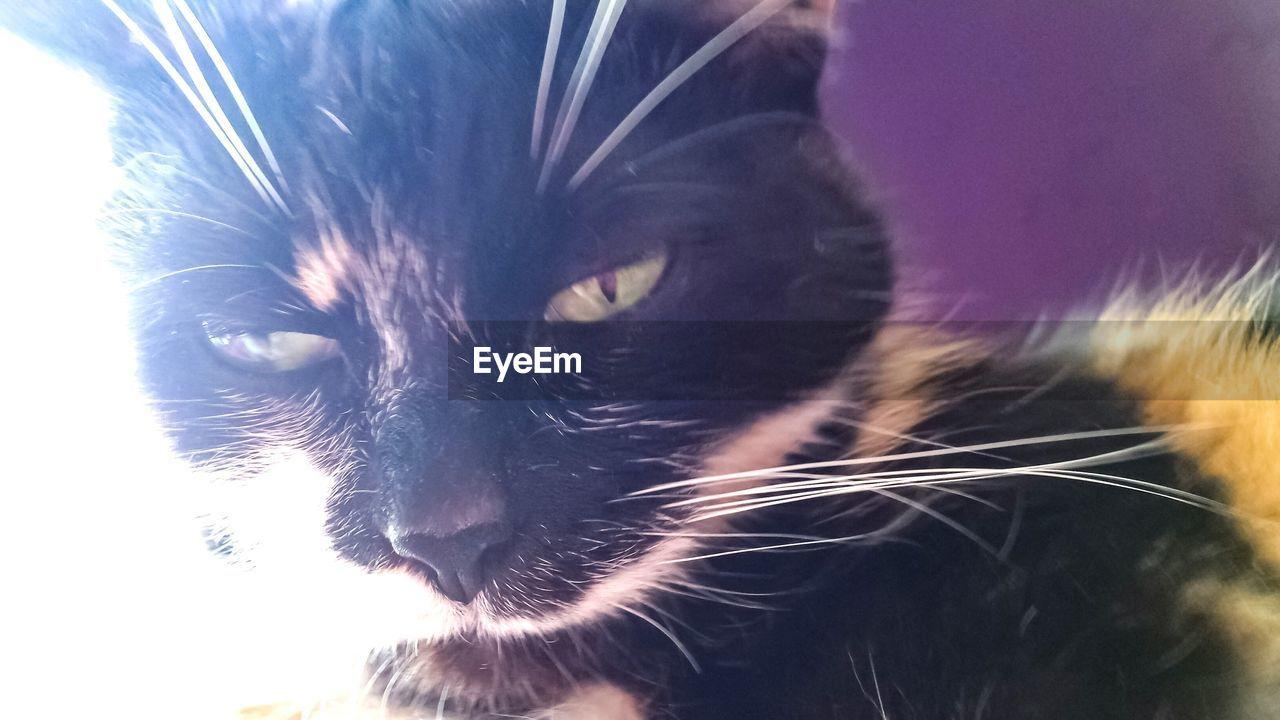 domestic cat, feline, cat, domestic, mammal, no people, pets, domestic animals, close-up, nature