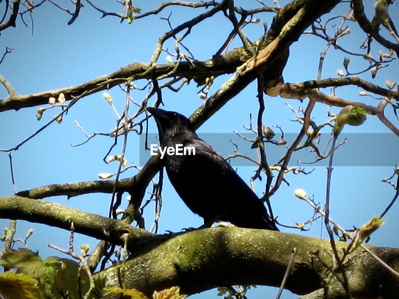 tree, low angle view, branch, animal themes, animals in the wild, one animal, bird, perching, no people, day, animal wildlife, nature, outdoors, clear sky, close-up, sky
