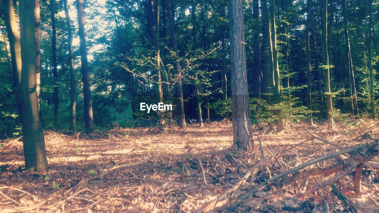 forest, tree, nature, tree trunk, day, adventure, sunshine, outdoors, beauty in nature, no people