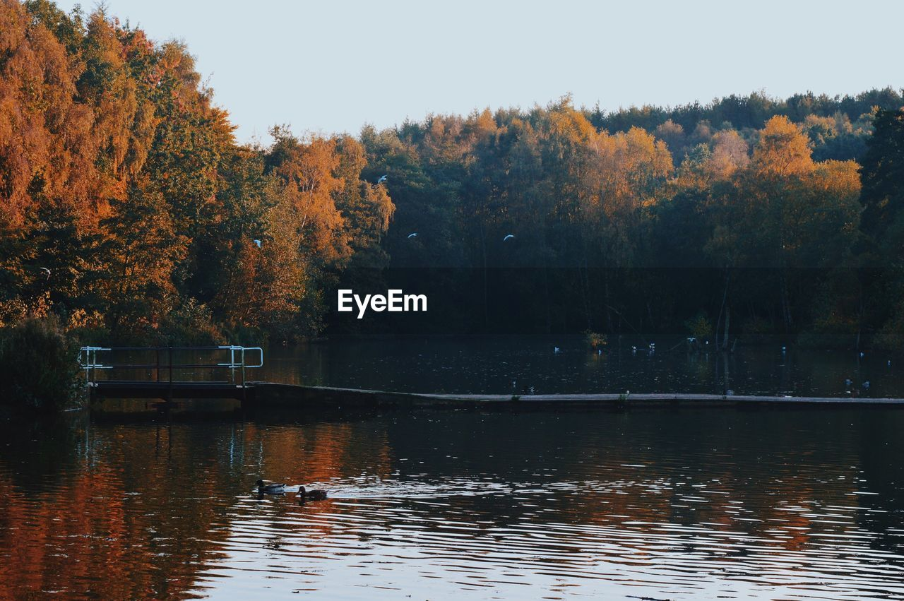 CALM LAKE WITH TREES IN BACKGROUND
