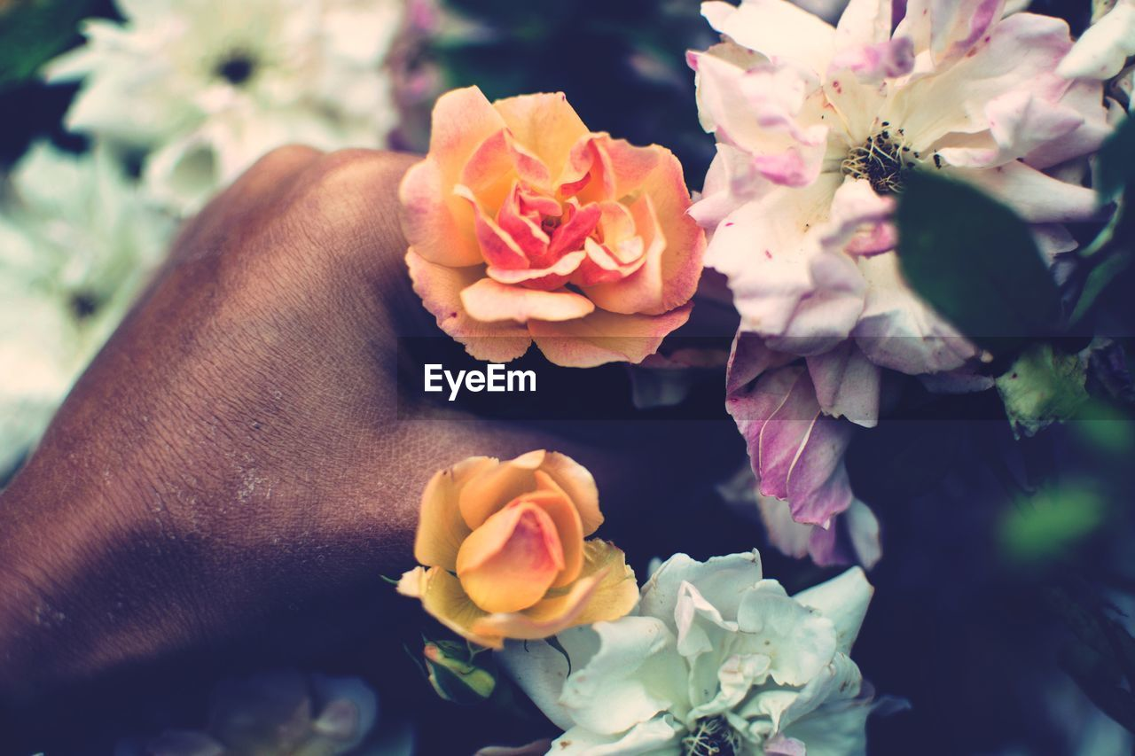 flower, petal, fragility, flower head, beauty in nature, rose - flower, nature, freshness, close-up, no people, plant, growth, day, outdoors