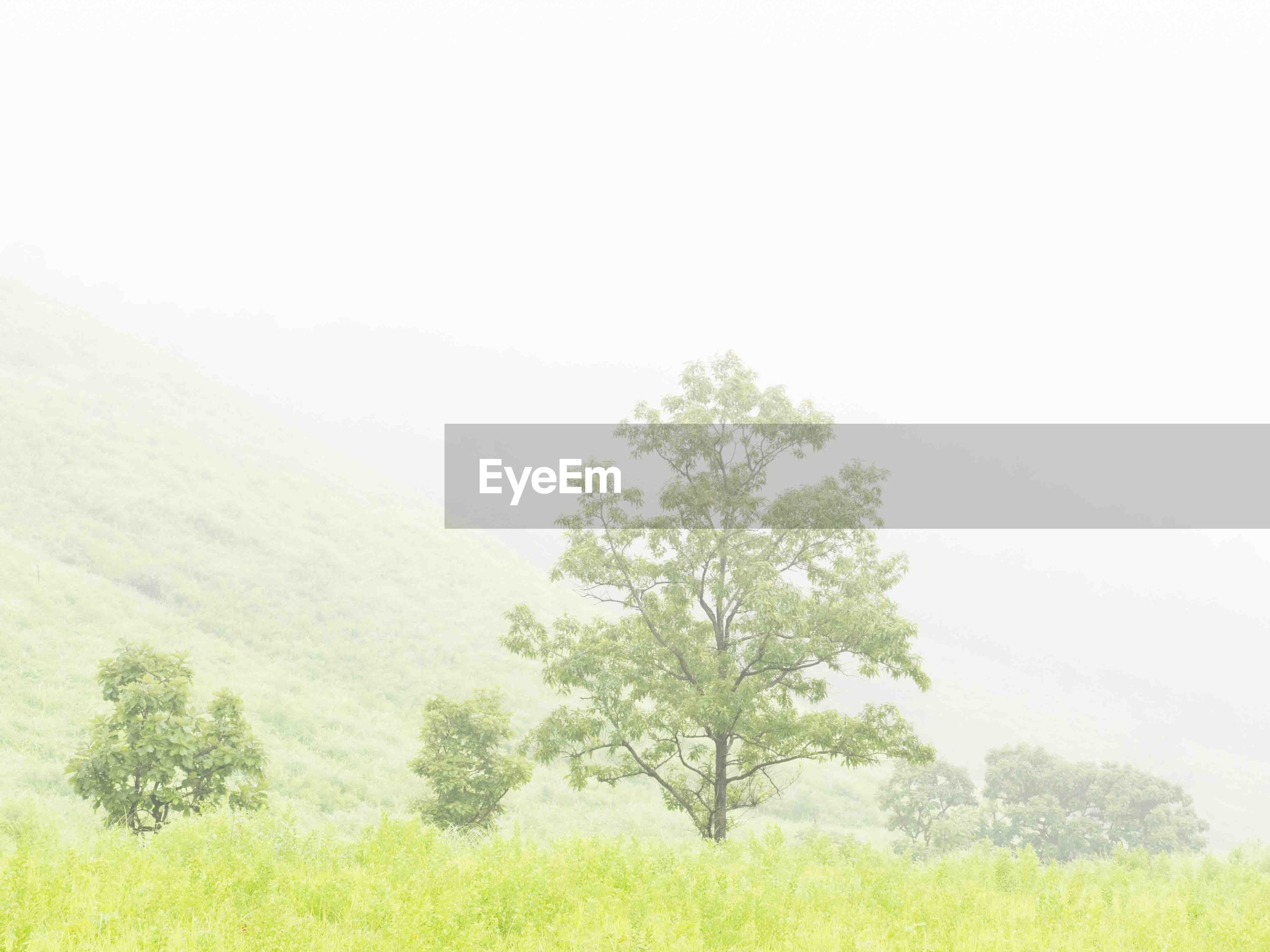 tree, nature, beauty in nature, tranquility, clear sky, landscape, field, grass, growth, no people, plant, tranquil scene, outdoors, day, scenics, sky, freshness