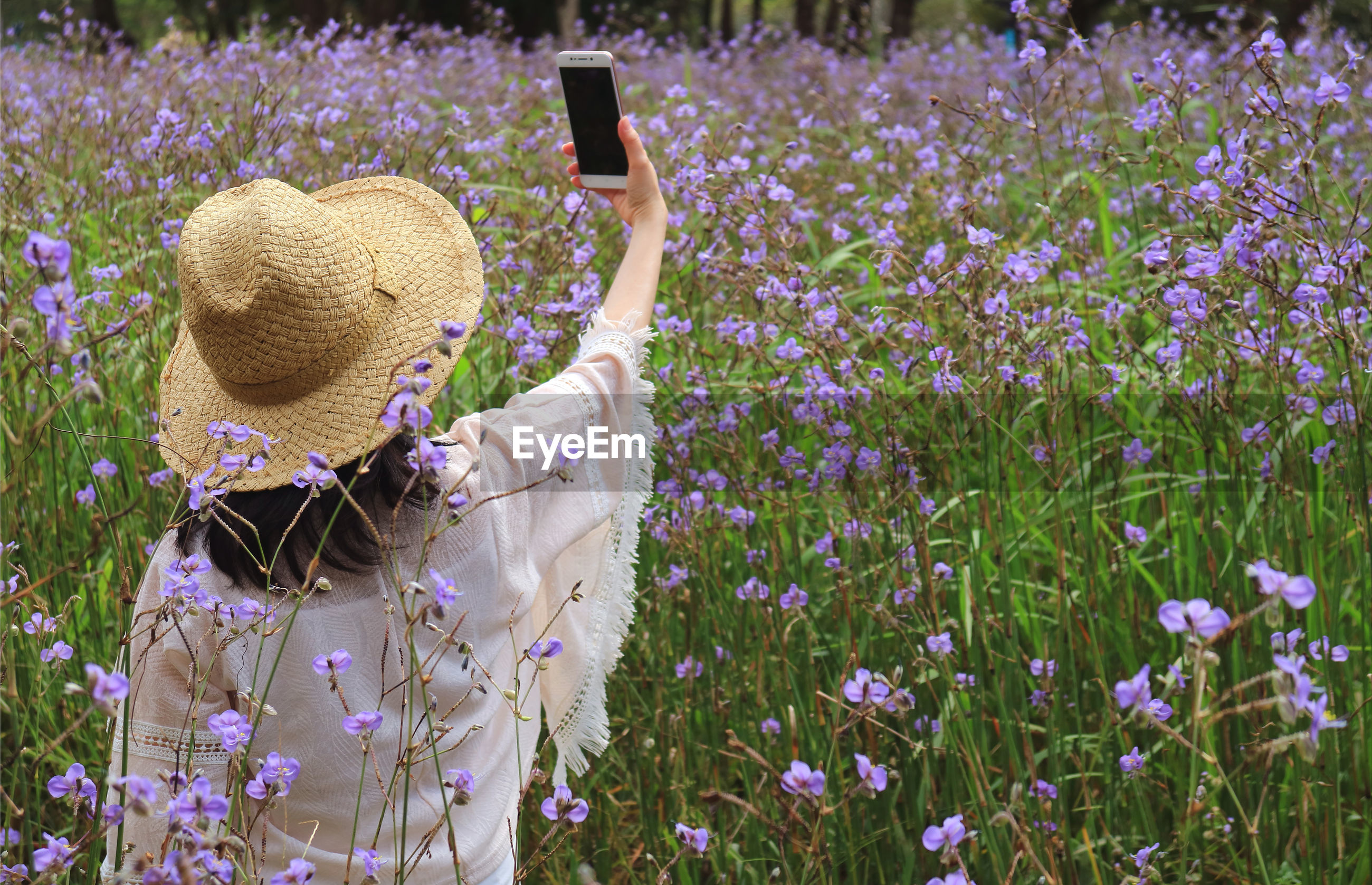 Rear view of woman taking selfie while standing by purple flowering plants on land