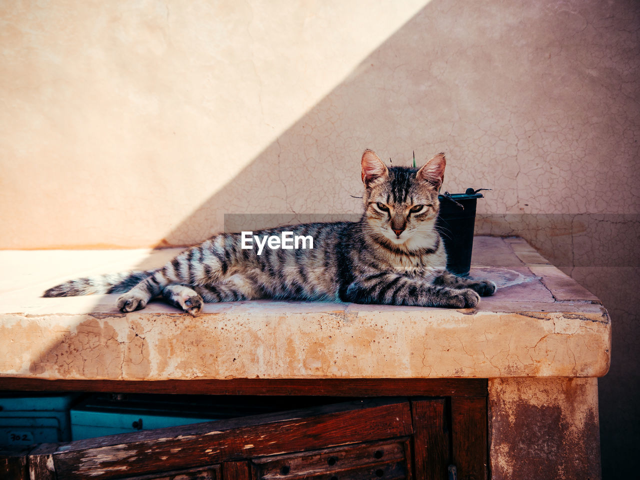 cat, feline, domestic cat, pets, domestic animals, relaxation, domestic, mammal, animal, animal themes, one animal, vertebrate, wood - material, resting, no people, sitting, wall - building feature, table, day, looking away, whisker, tabby