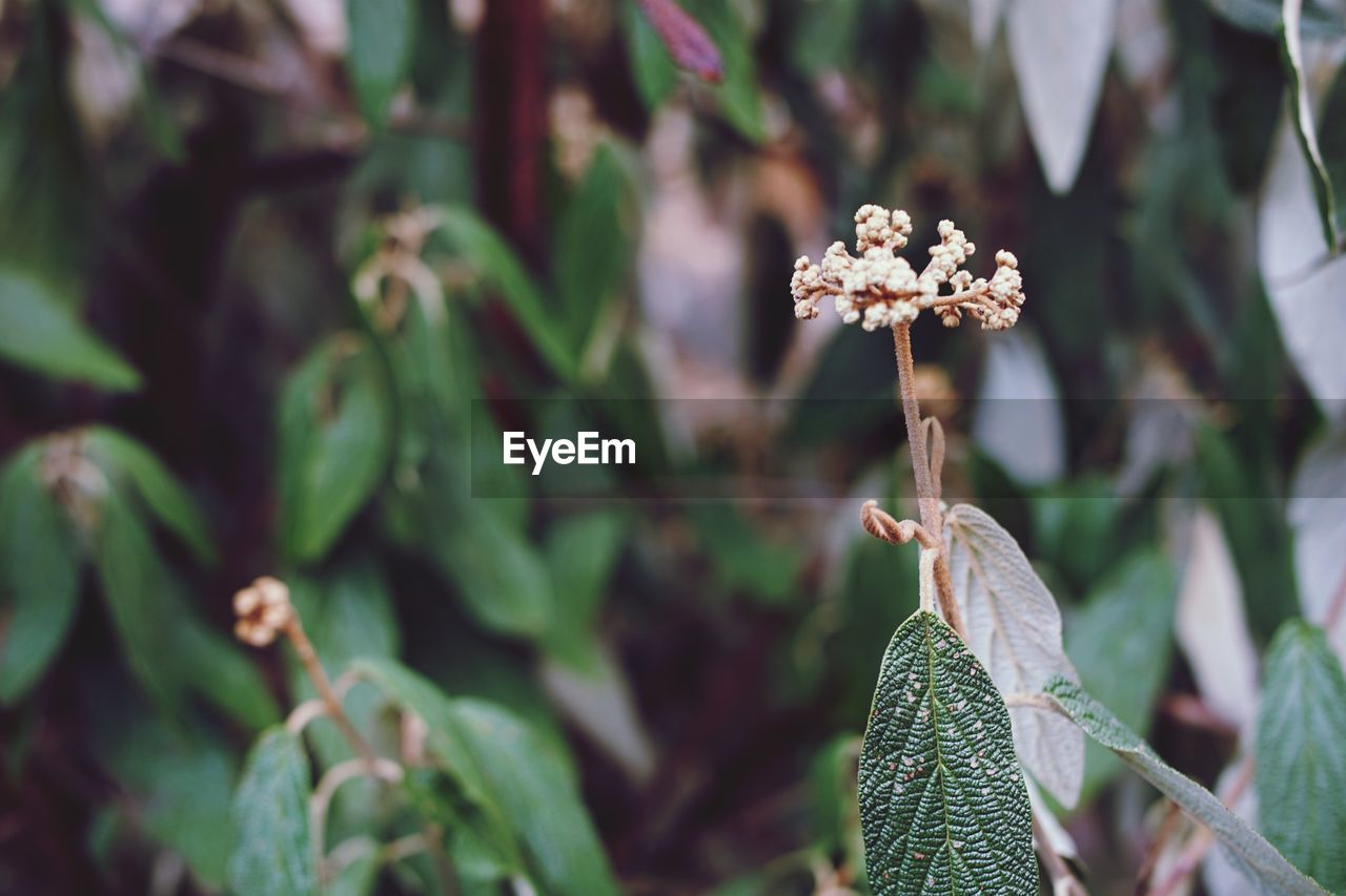 nature, growth, plant, focus on foreground, leaf, green color, close-up, no people, outdoors, day, beauty in nature, fragility, flower, flower head, freshness, animal themes