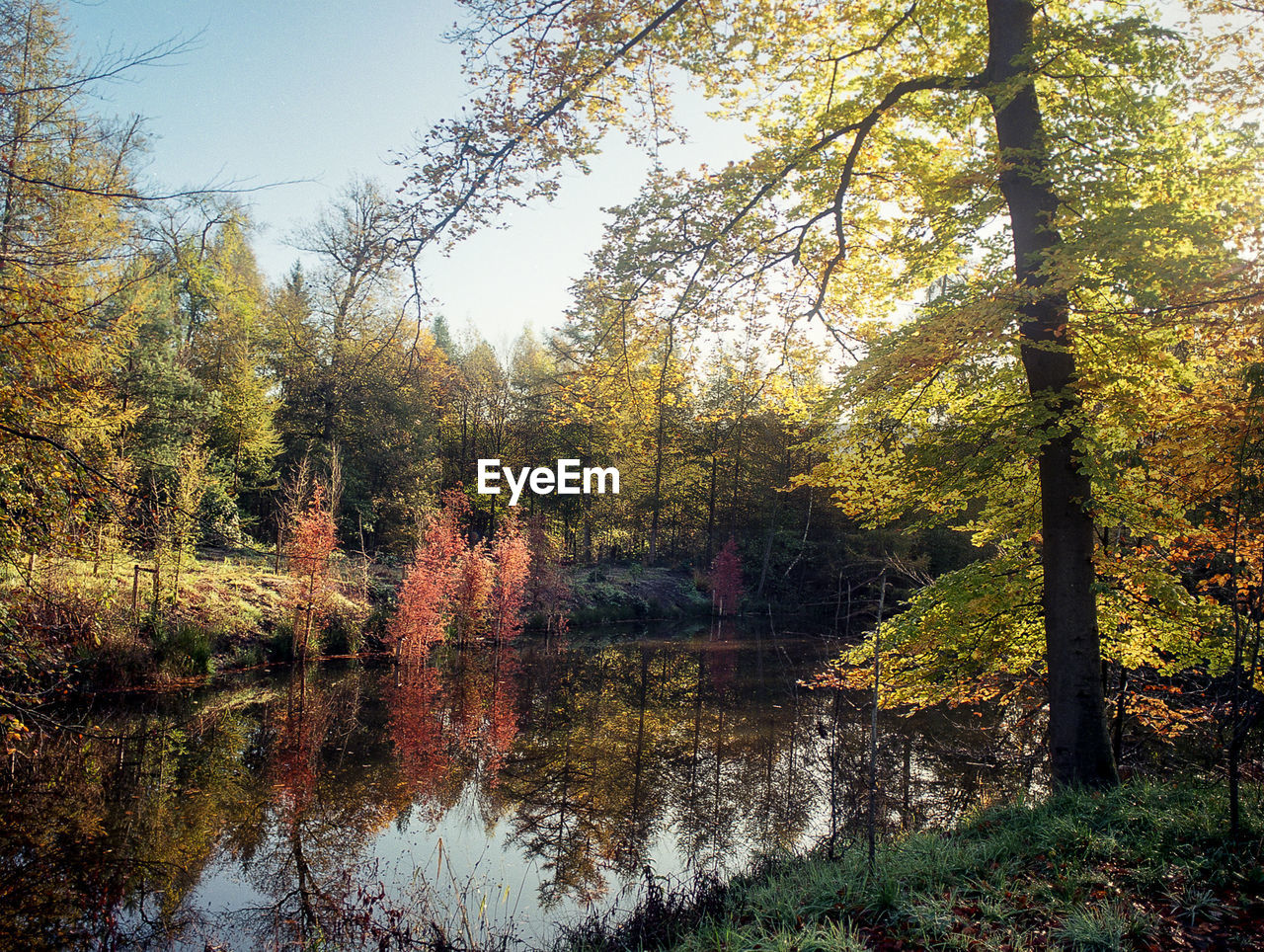 tree, plant, reflection, tranquility, beauty in nature, water, autumn, tranquil scene, lake, change, growth, scenics - nature, nature, forest, no people, sky, day, idyllic, non-urban scene, outdoors