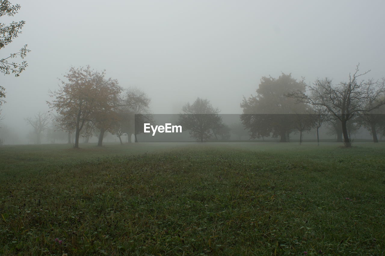 fog, plant, tree, tranquility, beauty in nature, tranquil scene, sky, environment, landscape, field, land, nature, growth, non-urban scene, scenics - nature, grass, idyllic, no people, outdoors, hazy