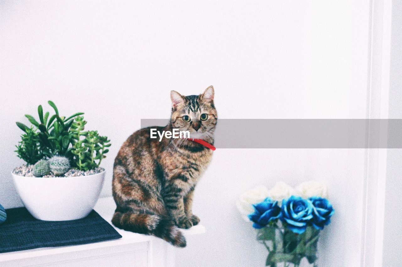 Portrait Of Cat Sitting By Potted Plant Against Wall