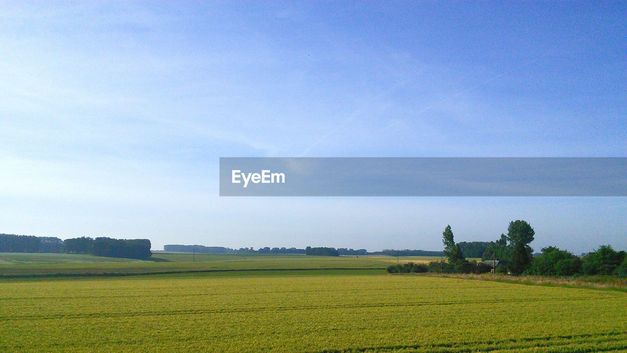 landscape, environment, sky, scenics - nature, plant, tranquil scene, field, beauty in nature, land, tranquility, agriculture, cloud - sky, tree, growth, rural scene, day, green color, nature, grass, no people, outdoors