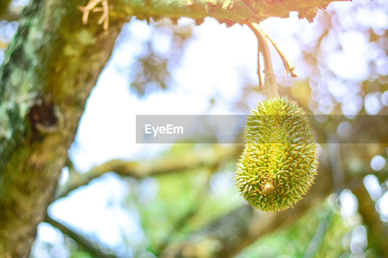 plant, tree, growth, focus on foreground, close-up, day, branch, nature, no people, beauty in nature, leaf, outdoors, freshness, plant part, yellow, pussy willow, flower, tranquility, selective focus, fragility, willow tree