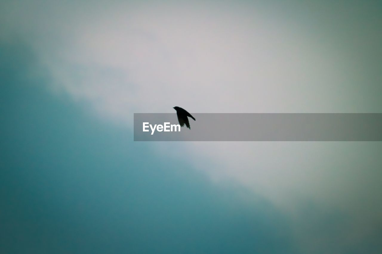 sky, vertebrate, animal themes, bird, animal, animals in the wild, animal wildlife, one animal, silhouette, flying, beauty in nature, cloud - sky, low angle view, no people, nature, tranquility, outdoors, scenics - nature, spread wings, tranquil scene, eagle