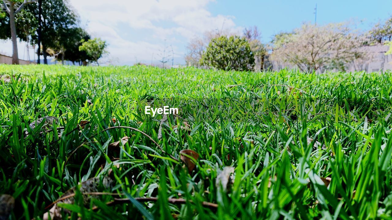 grass, green color, growth, field, nature, agriculture, day, no people, outdoors, beauty in nature, landscape, tree, close-up, sky, freshness