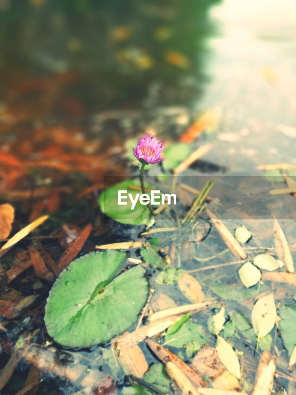 nature, green color, no people, beauty in nature, flower, water, day, plant, outdoors, growth, leaf, fragility, close-up, freshness, flower head